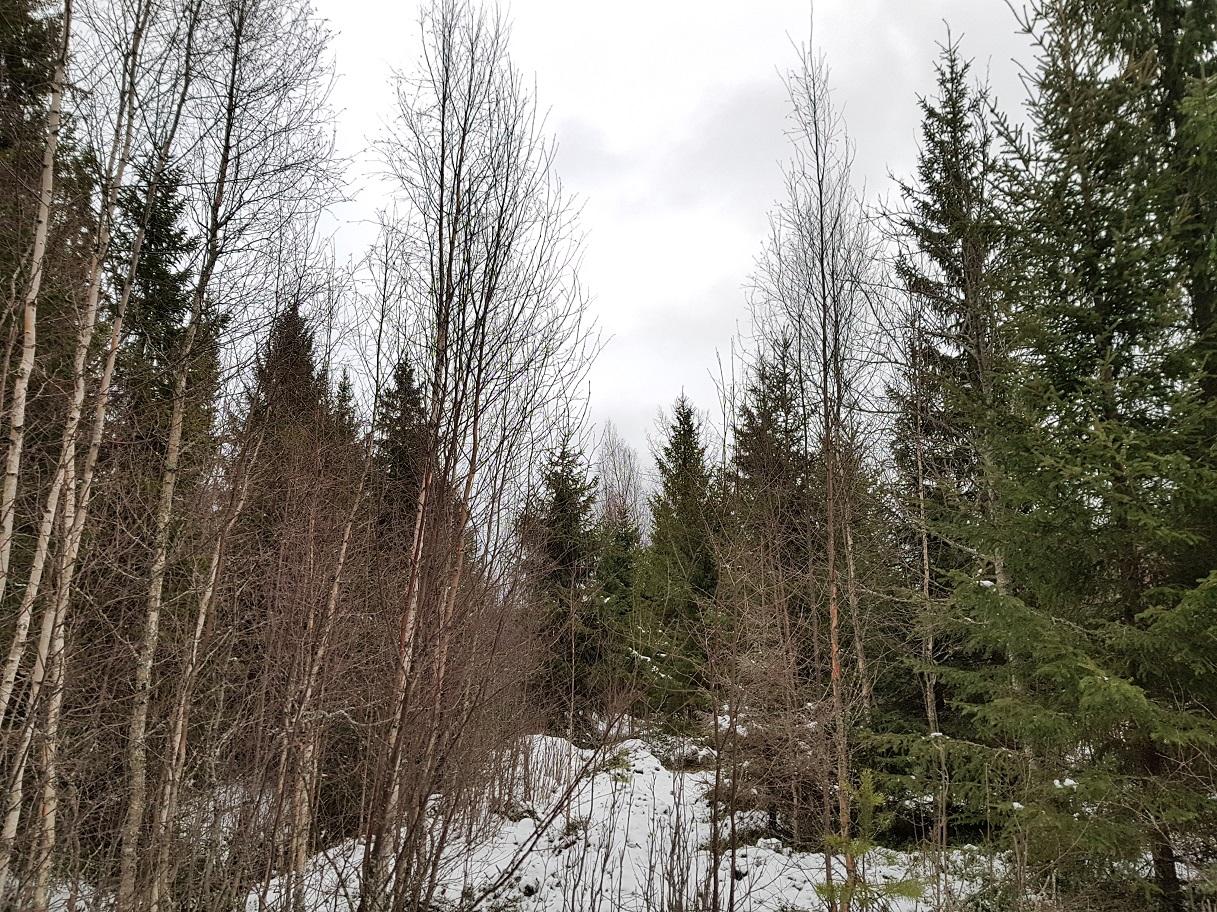 Hehtaari Metsää Hinta